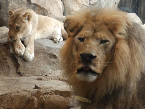 Zoo 01
