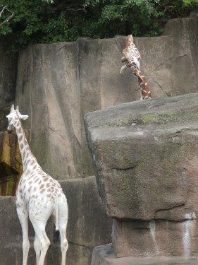 Zoo 03