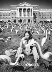 flamingos 1979