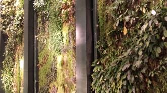 vertical garden 2